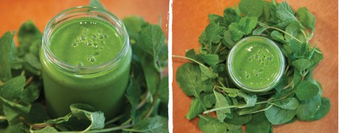 Classic Green Smoothie Recipe by OmniBlend Australia